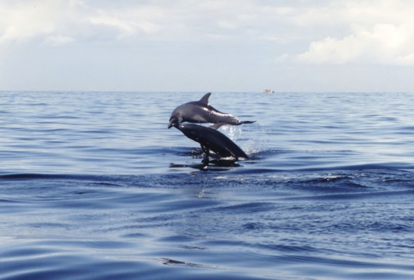 Dolphins-007_filtered