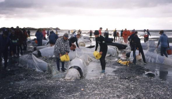 Paul & Rich keeping the Pilot Whale wet